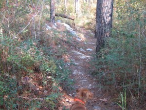 Backbone Trail - Kisatchie National Forest
